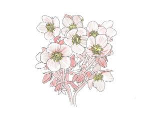 2019_floralwhiteFQ2